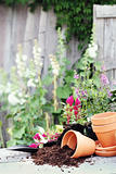 Preparing Flower Pots