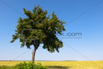 Green tree and field crops