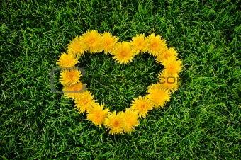 Dandelion heart on a grass