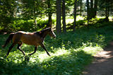 Galloping horse in the woods