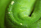 green snake skin