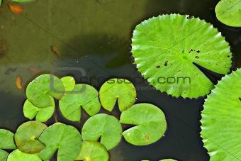 floating plants in pool