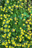 yellow flowerbed