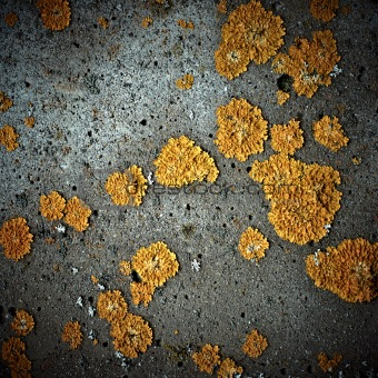 Lichens on stone texture, closeup