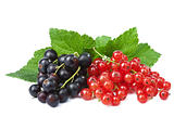 blackcurrant and redcurrant isolated
