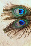 Two peacock feathers for background