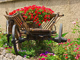 flower bed in a peasant cart