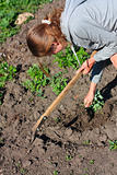 Young woman is engaged in weeding the garden