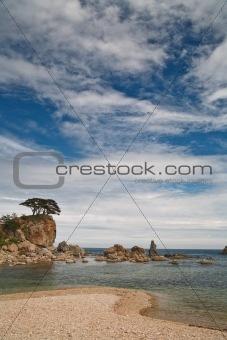 tree on the sea