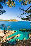 russian primorye rocky shore cedar