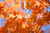 Russian fall colors