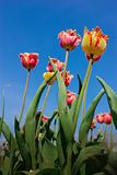 pretty weird tulips stretch to the sky