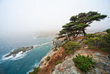 Russia, Primorye, pine on a rocky seashore