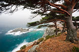 Russia, Primorye, centennial pine on a rocky beach