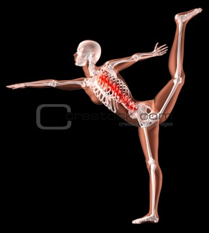 Female skeleton in yoga position