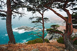 Russia, Primorye, centennial cedar on a rocky beach-2