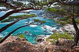 Ñoastal cedar rocky shore