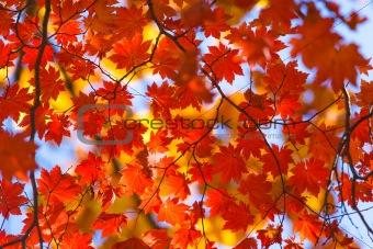 autumnal abundance