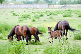 family of horses on the pasture