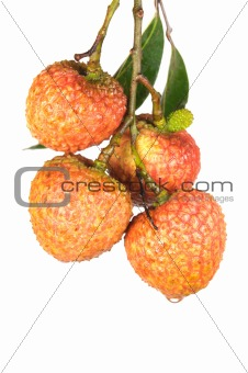 Litchi with green leaves
