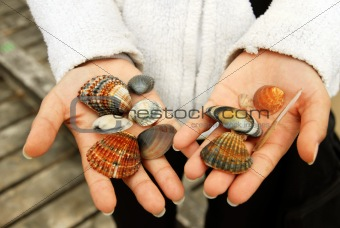 Sea Shells in hands