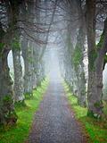 autumn forest allee
