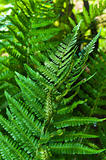 Fresh green fern with blurry background