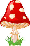 Mushroom amanita