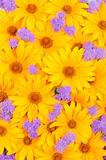 Floral yellow and purple background