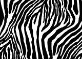 zebra as  texture