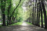 landscape park  in spring