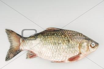 Fresh carp fish