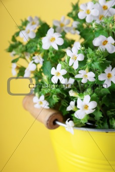 bacopa part