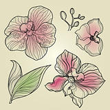 Set of floral orchid design elements