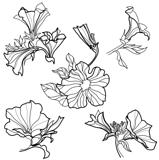 Vector set of bell-flowers