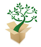 abstract green tree growing out of cardboard box on white background