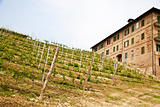 Italian vineyard - Monferrato