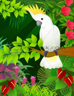 Tropical bird in the tropical forest