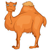 Cartoon_Camel_Vector