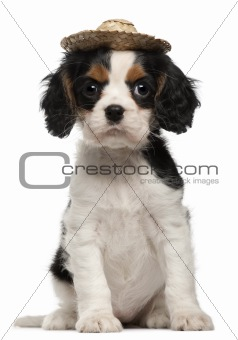 Cavalier King Charles Puppy wearing straw hat, 2 months old, sitting in front of white background
