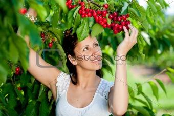 Beautiful young girl picking cherries
