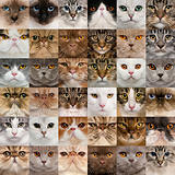 Collage of 36 cat heads