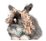 English Angora rabbit wearing wig and pearls in front of white background