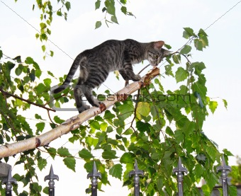 Gray cats on thin cut birch branch