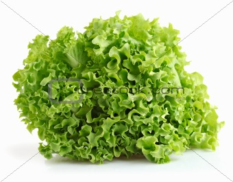 green leaves lettuce