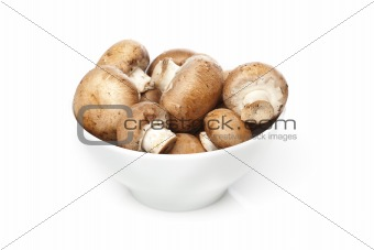A fresh brown mushroom