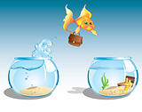 business goldfish