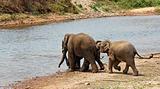 Playing elephants.