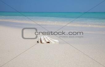 Mussel on an exotic beach