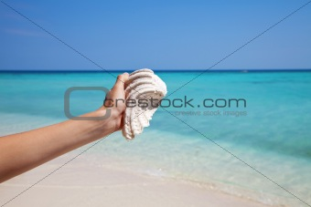 Holding a mussel on an exotic beach